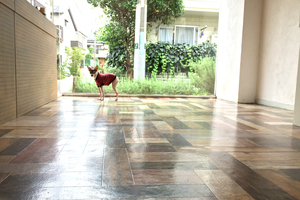 Dog Cafe ABC レンタルスペース : カフェスペース貸切の会場写真